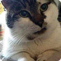 Adopt A Pet :: charlie - brewerton, NY