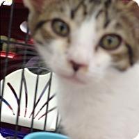 Adopt A Pet :: Buzz - Redondo Beach, CA
