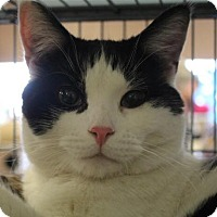 Adopt A Pet :: Pickle - THORNHILL, ON