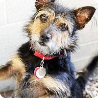 Adopt A Pet :: Moses - Atlanta, GA