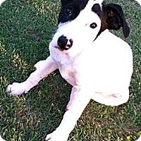 Adopt A Pet :: Delilah - Conway, AR