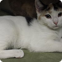 Adopt A Pet :: Corky - Richboro, PA