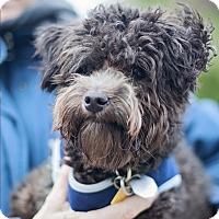 Adopt A Pet :: Pierre - Kingwood, TX
