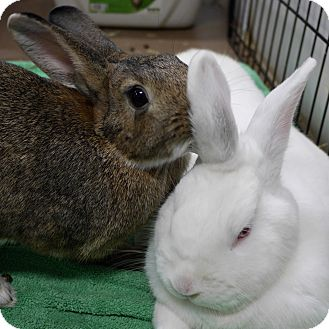 Other/Unknown Mix for adoption in Montclair, California - Cookie & Eduardo