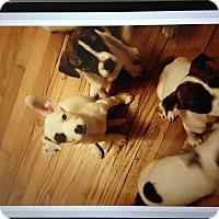 Adopt A Pet :: Puppies - Garwood, NJ