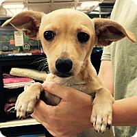 Adopt A Pet :: Sky#1M - Orlando, FL
