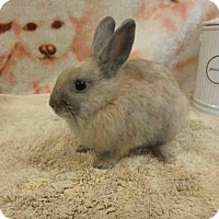 Adopt A Pet :: Tinka - Los Angeles, CA