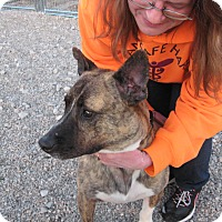 Adopt A Pet :: SULLY - Port Clinton, OH