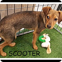 Adopt A Pet :: SCOOTER - Winchester, CA