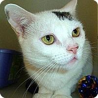 Adopt A Pet :: Cheryl - Carmel, NY