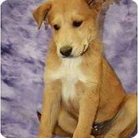 Adopt A Pet :: Sunny - Broomfield, CO