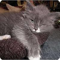 Adopt A Pet :: Clarabell - Warren, MI