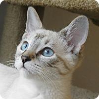 Adopt A Pet :: Autumn - Davis, CA