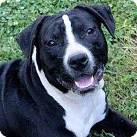 Adopt A Pet :: Elizabeth - Naugatuck, CT