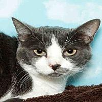 Adopt A Pet :: BELLE - Alameda, CA