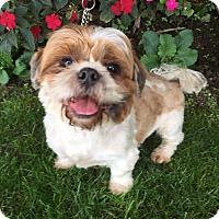 Adopt A Pet :: DASHEL - Los Angeles, CA