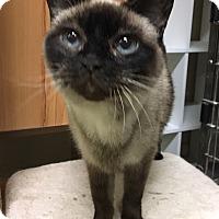 Adopt A Pet :: Sam - Oakdale, CA