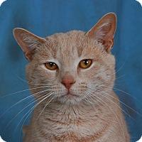 Adopt A Pet :: Trevor - Toms River, NJ