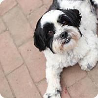 Adopt A Pet :: Oreo - Morganville, NJ