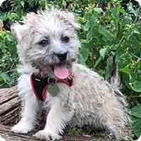 Adopt A Pet :: Tatum - Davie, FL