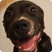 Adopt A Pet :: Daisy - Weatherford, TX