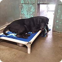 Adopt A Pet :: Jethro - Middletown, NY
