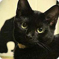 Adopt A Pet :: Monica - Seminole, FL
