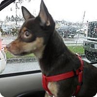 Adopt A Pet :: Xena - Vancouver, BC