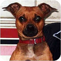 Adopt A Pet :: Chico - Swiftwater, PA
