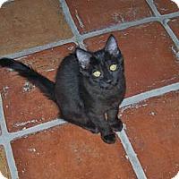 Adopt A Pet :: Blossom - Scottsdale, AZ