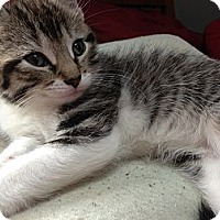 Adopt A Pet :: Evageline & Kittens - Riverside, RI