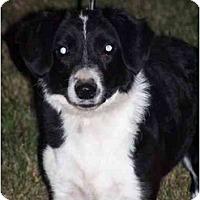 Adopt A Pet :: Oreo - Honaker, VA
