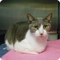 Adopt A Pet :: Bloom - Hilton Head, SC