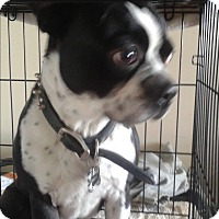 Adopt A Pet :: Jaxx - Northumberland, ON