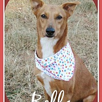 Adopt A Pet :: Bella - Raleigh, NC