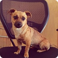 Adopt A Pet :: Baby Girl - Manhattan, NY