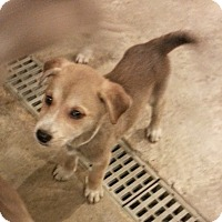 Adopt A Pet :: Prim*ADOPTED!* - Chicago, IL