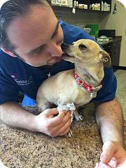 Chihuahua Mix Dog for adoption in Nanuet, New York - Earl
