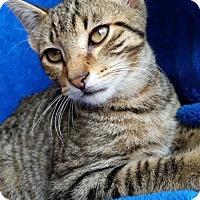 Adopt A Pet :: Jax - Hornell, NY