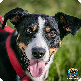 Dachshund Mix Dog for adoption in Evansville, Indiana - Feisty