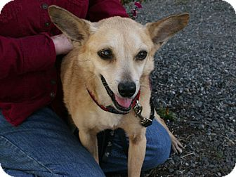 Jack Russell Terrier/Terrier (Unknown Type, Small) Mix Dog for adoption in Republic, Washington - Jack