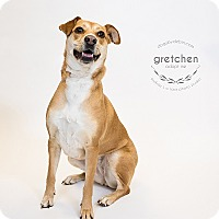 Retriever (Unknown Type) Mix Dog for adoption in Kansas City, Missouri - Gretchen