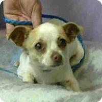 Adopt A Pet :: Cranberry Cranson - Seattle, WA