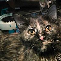 Adopt A Pet :: TURTLE PIE - Louisville, KY