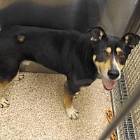 Adopt A Pet :: Rocky - Martinsburg, WV