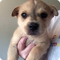 Adopt A Pet :: Landon - Cave Creek, AZ