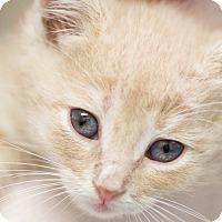 Adopt A Pet :: JOHNSTON - Houston, TX