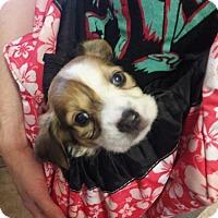 Adopt A Pet :: Paradise - Fort Lauderdale, FL