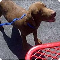 Adopt A Pet :: Athos - Cumming, GA
