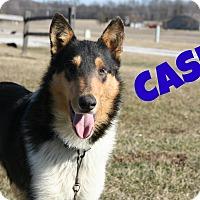 Adopt A Pet :: Cash - Brazil, IN